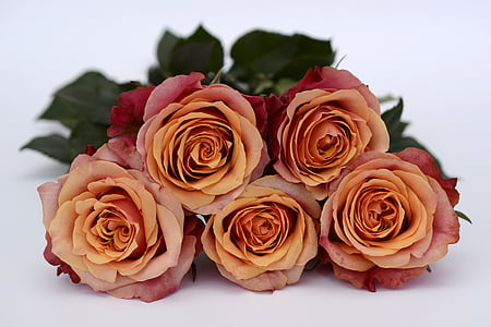 five orange-and-red roses