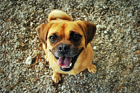 photo of puggle sitting on ground at daytime