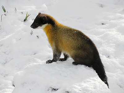 photo of rodent in snow