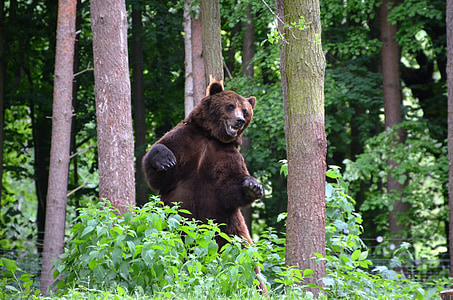 Grizzly bear in between brown tree barks with green leaf plants at daytime