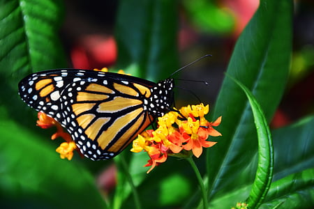 monarch butterfly perched on yellow petaled flower in closeup photography