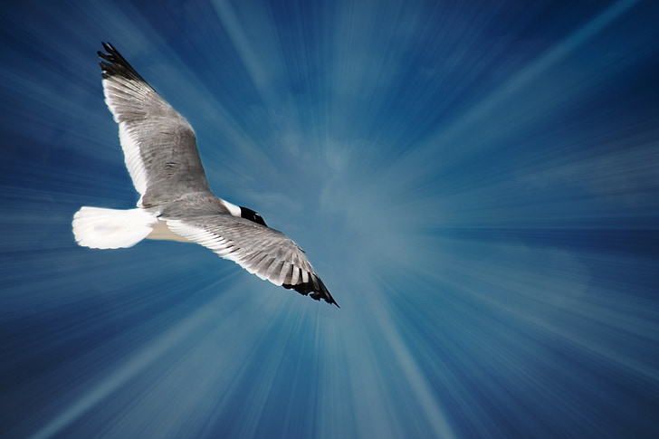 gray and white bird flying under blue sky during daytime