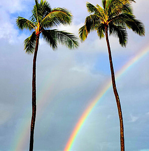 two coconut trees with rainbow