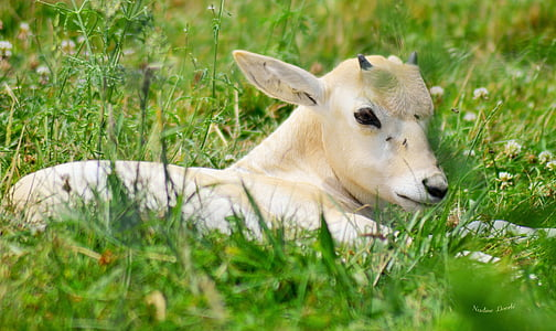 white and beige cattle on green grass field