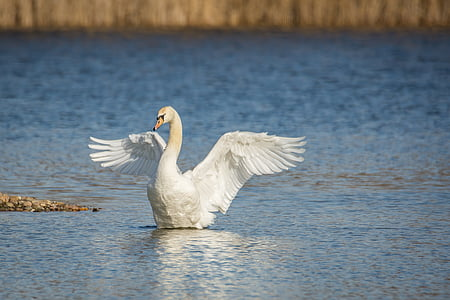 white duck on body of water photography