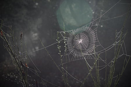 photo of cab webs