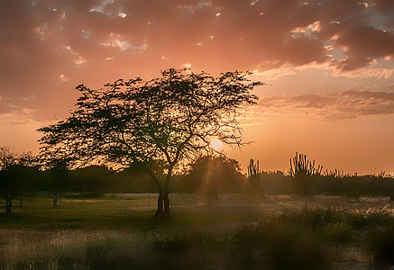 black tree surrounded by green grass field at golden hour