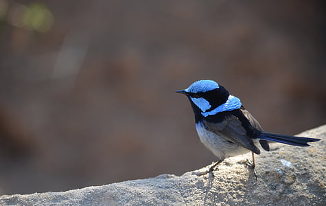 selective focus of black and blue bird