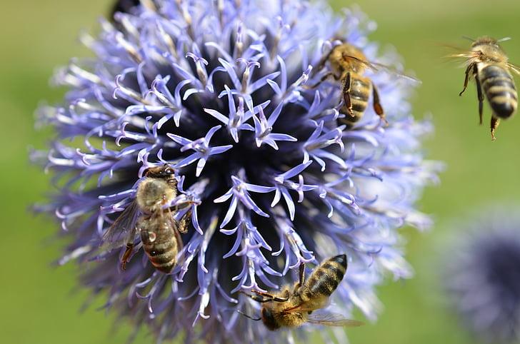 bees, blossom, bloom, purple, summer, flower