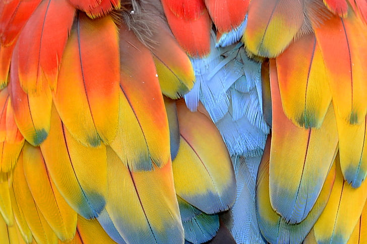 yellow, blue, and red bird feather close up photo