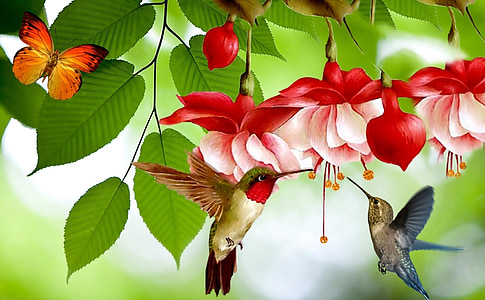 two assorted-color hummingbirds flying near red and white flowers