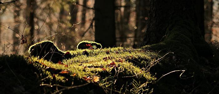 photo of green grass