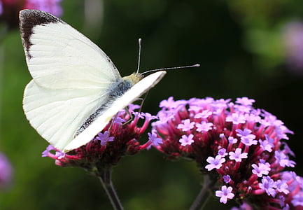 white butterfly perched on pink flower