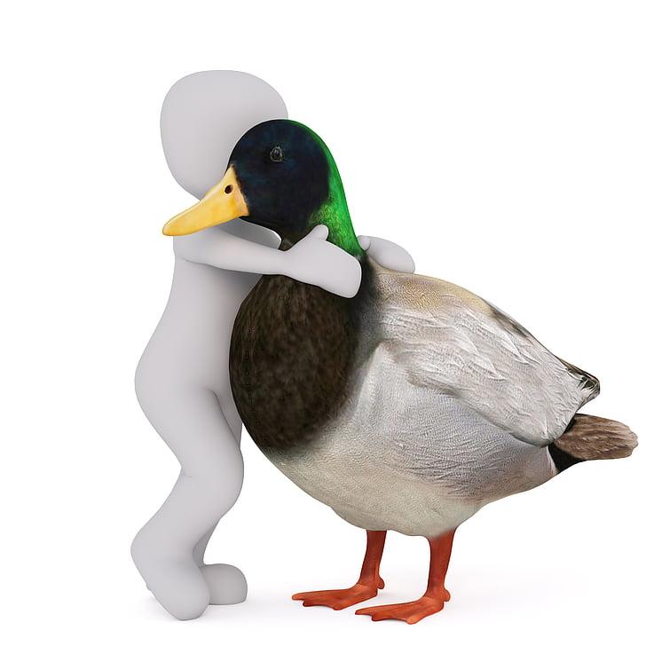 male mallard duck hugged by white child vector