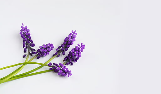 lavender on white surface