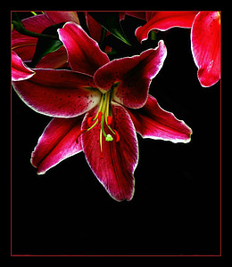 red and green petaled flower