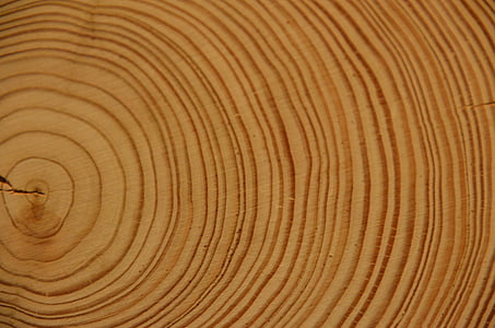 wood, annual rings, tree, log, strains