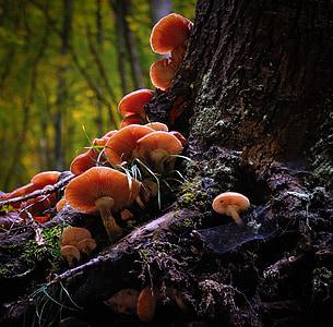 cluster of mushroom on tree trunk