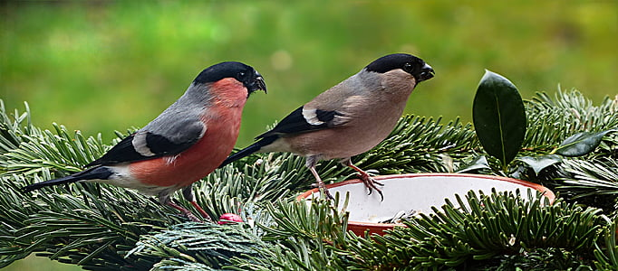 two gray birds on green plant