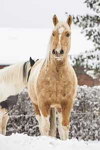 selective focus photography of horse standing on snow field