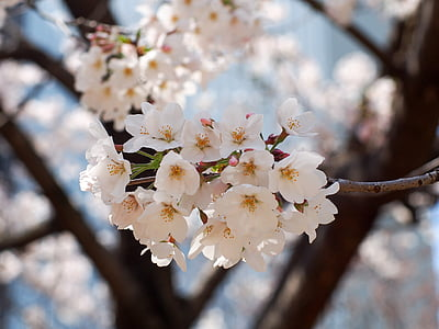 selective focus photography of tree of white petaled flower