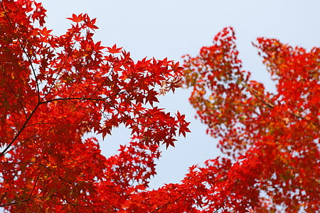 photo of red leafed plant during daytime