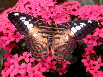 close-up photography of brown and black butterfly