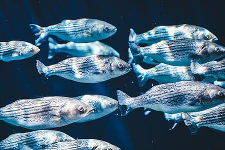 white fish lot