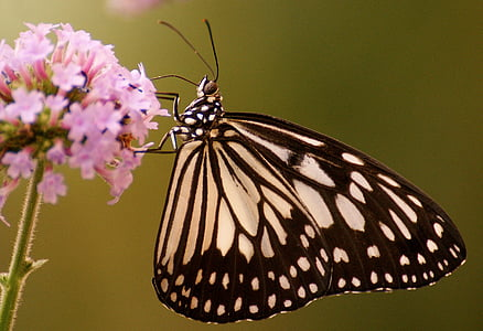 paper kite butterfly perching on pink cluster flower in close-up photography