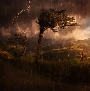 green tree under stormy weather