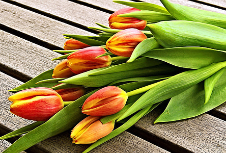 red-and-yellow tulips on brown wood planks