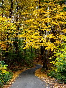 gray asphalt road under yellow leaf trees