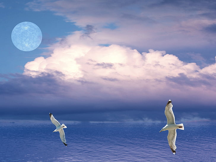 two white birds flying above calm body of water
