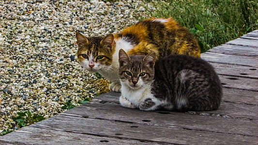 calico cat and brown Tabby cat side-by-side