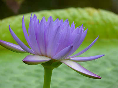 selective focus photography purple petaled flower