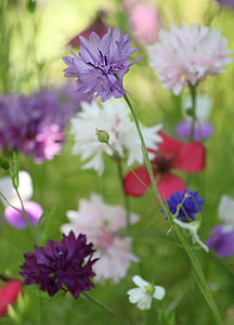 selective focus of purple petaled flower