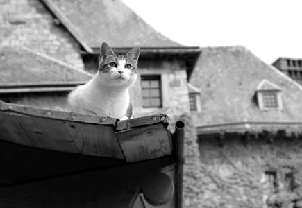 grayscale photography of tabby cat on house roof