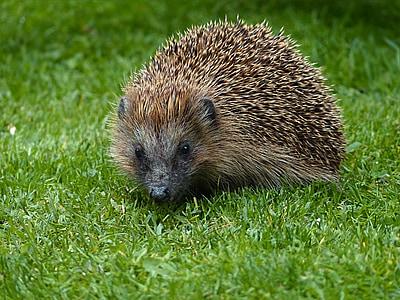 brown animal on green grass