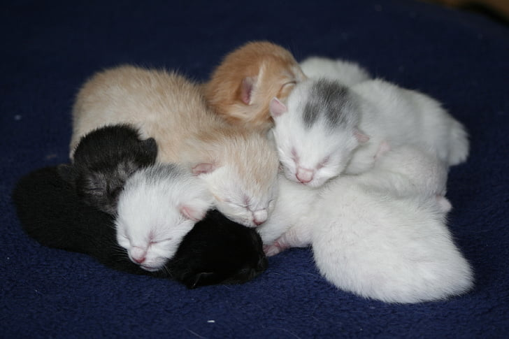 white and black kittens