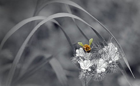 selective color of yellow bee on flower