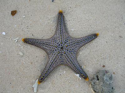 starfish on gray soil