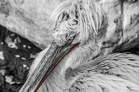 macro shot photography of white bird
