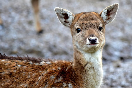 focus photography of brown deer