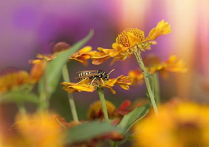 black and yellow bee perched on yellow flower