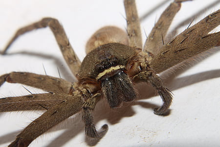 closeup photo of brown spider