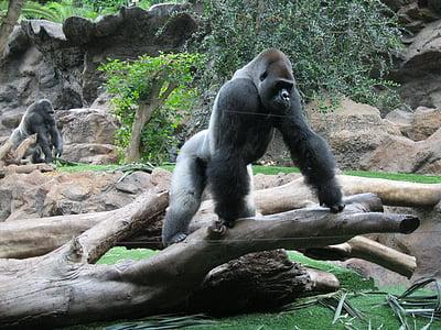 gorilla on driftwood