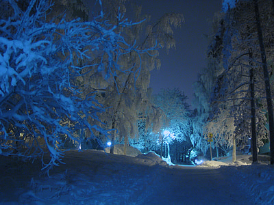 white trees during nighttime