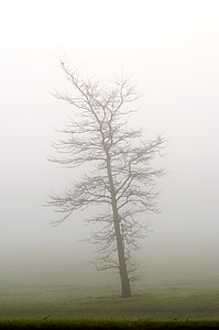 withered tree surrounded by fog