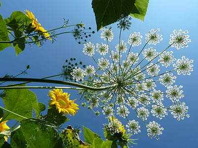low angle-view of petaled flowers