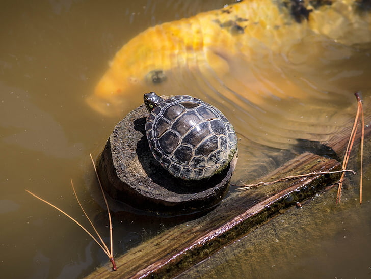 photo of black turtle on brown wood surrounded by water